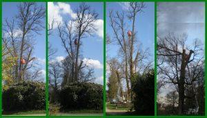 coupe élagage arbre